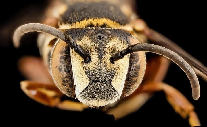 25 лучших макро-фотографий насекомых (13)