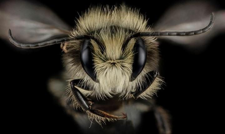 25 лучших макро-фотографий насекомых (16)