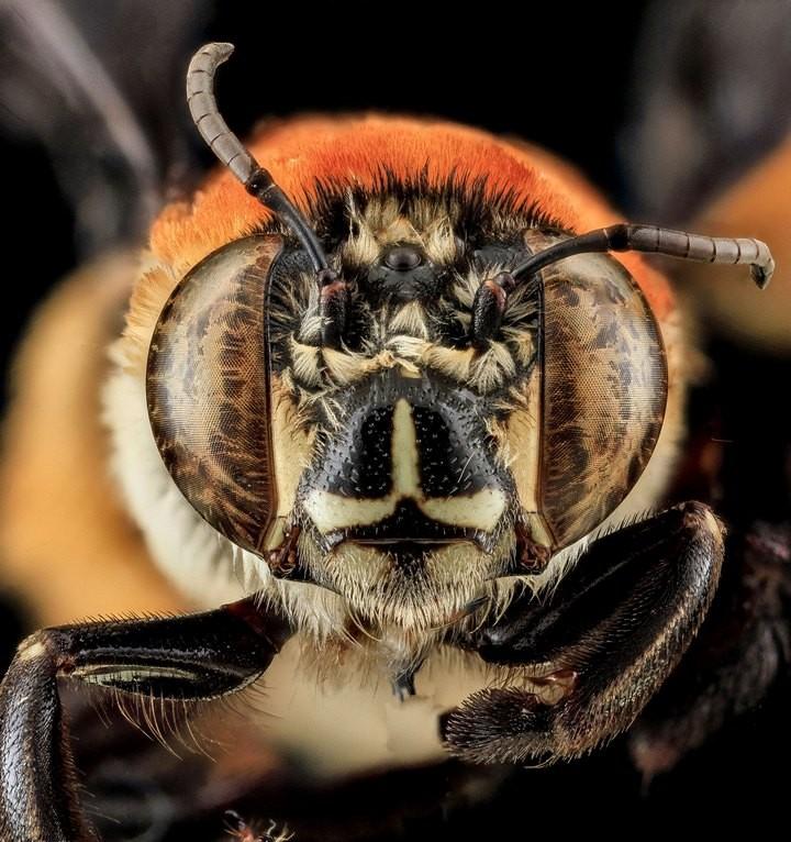 25 лучших макро-фотографий насекомых (18)