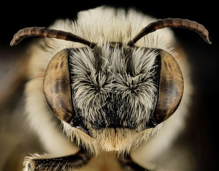 25 лучших макро-фотографий насекомых (23)
