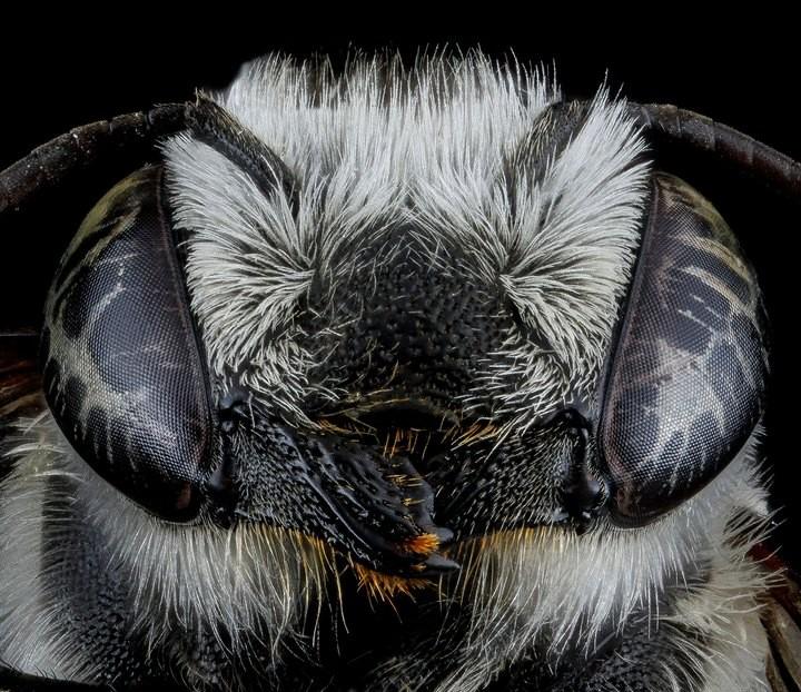 25 лучших макро-фотографий насекомых (25)