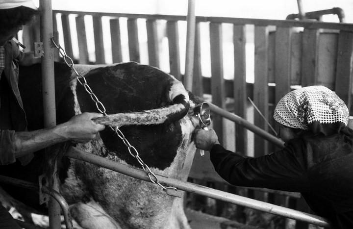 """Непарадные фотографии """"Великого и Могучего"""" от Владимира Соколаева (58)"""