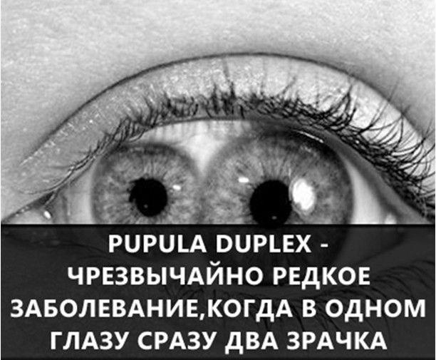 http://pulson.ru/wp-content/uploads/2016/06/pulson_19-1.jpg
