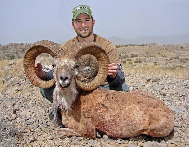 горного барана убили собственные рога (1)