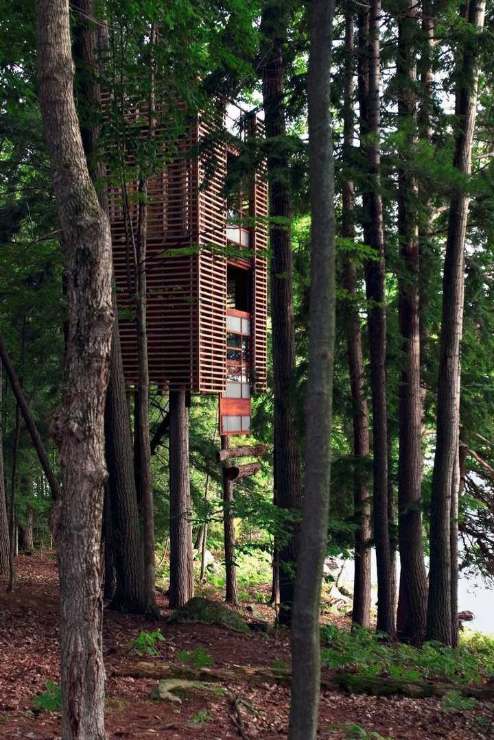 Удивительные дома на деревьях (1)