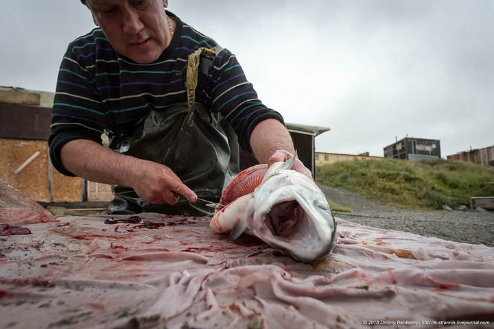 Рыбалка по Чукотски (10)