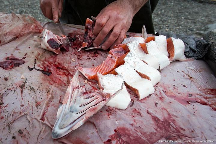 Рыбалка по Чукотски (11)