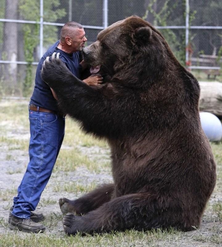 Необычная дружба с огромным медведем (1)