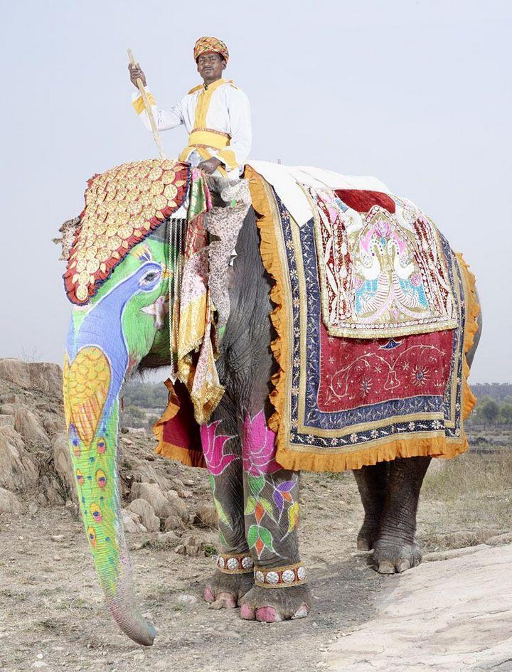 """""""Тюнинг"""" слона по-индийски (4)"""
