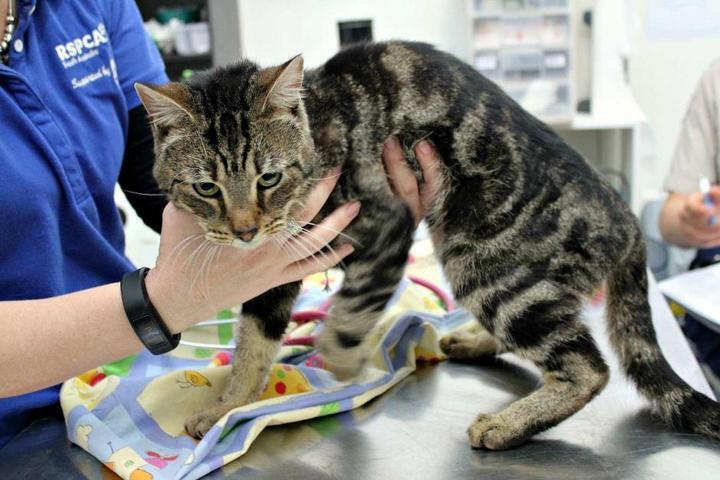 Выживший. Страшная история котенка по имени Трупер (1)