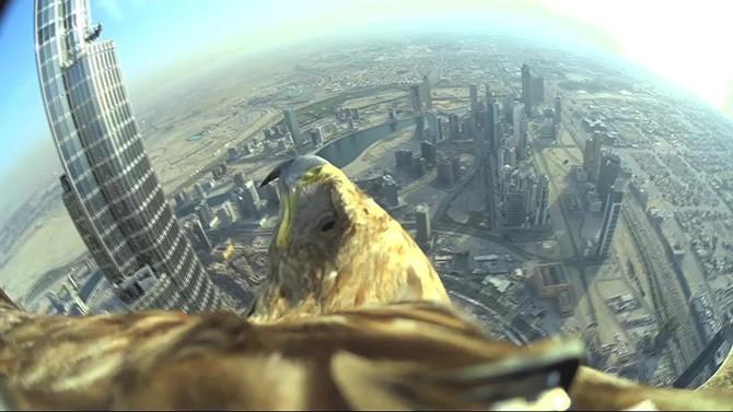 Полет с высоты 820 метров глазами орла