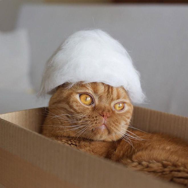 Шляпки для кошек из собственной шерсти (10)