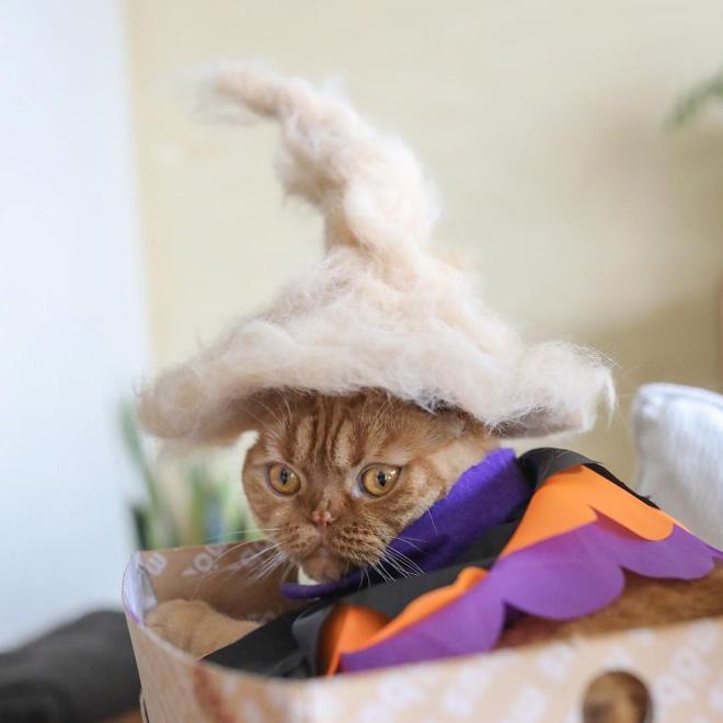Шляпки для кошек из собственной шерсти (3)