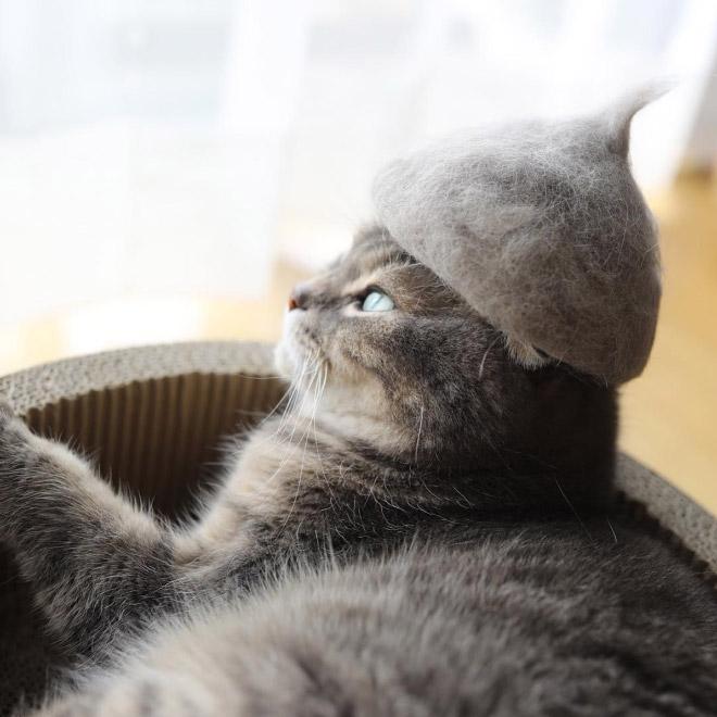 Шляпки для кошек из собственной шерсти (5)