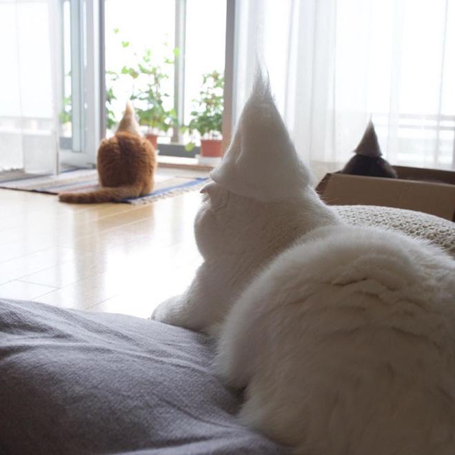 Шляпки для кошек из собственной шерсти (7)