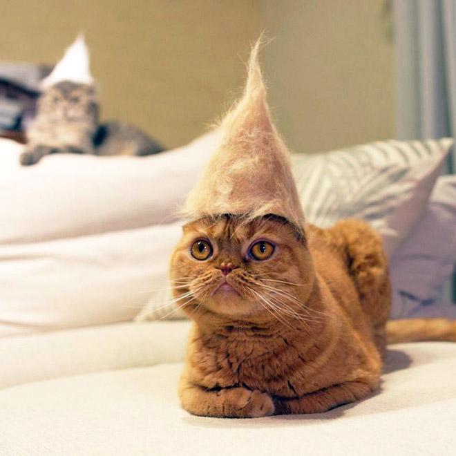 Шляпки для кошек из собственной шерсти (9)