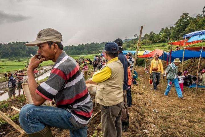 Традиционные гонки на быках в Индонезии (3)