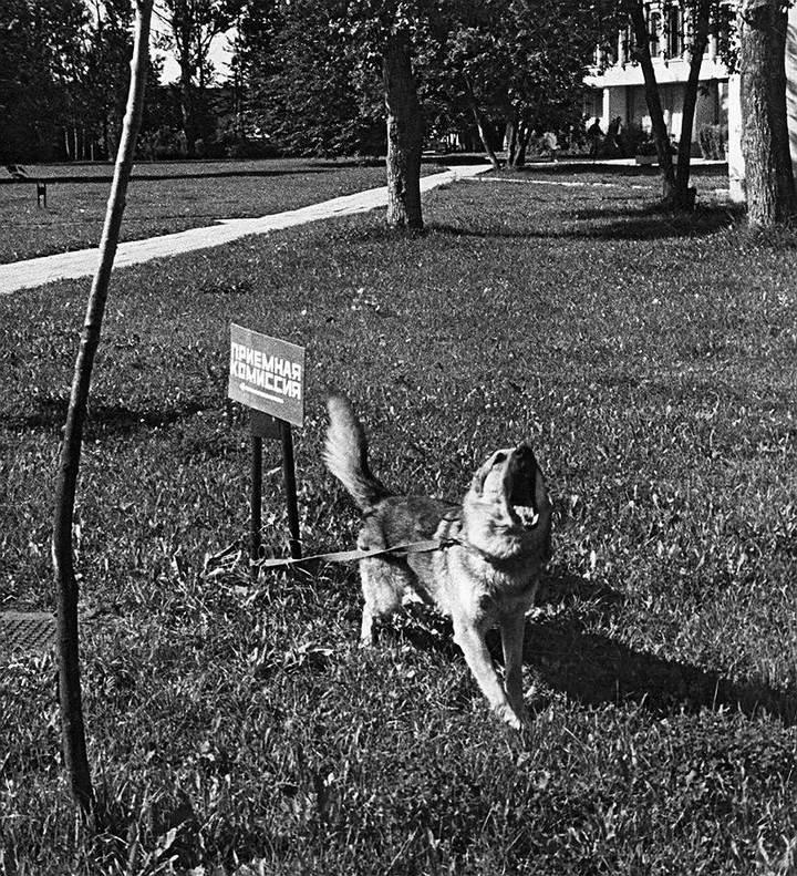 Советские фотографии из архива журнала «Огонек» (16)