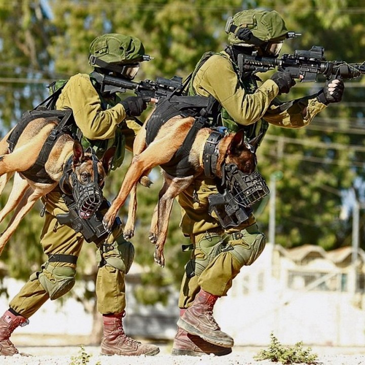 http://pulson.ru/wp-content/uploads/2017/02/V-Armii-oboronyi-Izrailya-boevyih-sobak-pri-operatsii-nesut-na-sebe-chto-byi-oni-ne-popali-pod-ogon..jpg
