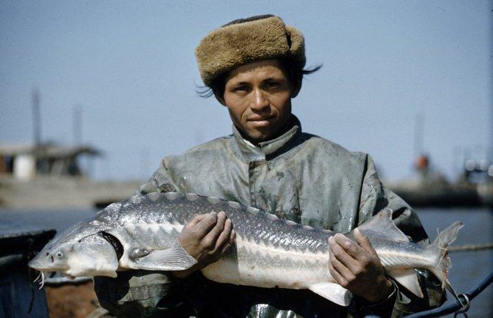 Добыча чёрной икры в Астрахани в 1960-м году (1)