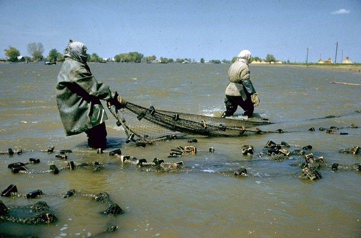 Добыча чёрной икры в Астрахани в 1960-м году (2)