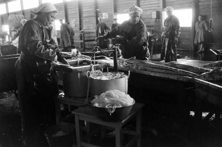 Добыча чёрной икры в Астрахани в 1960-м году (10)