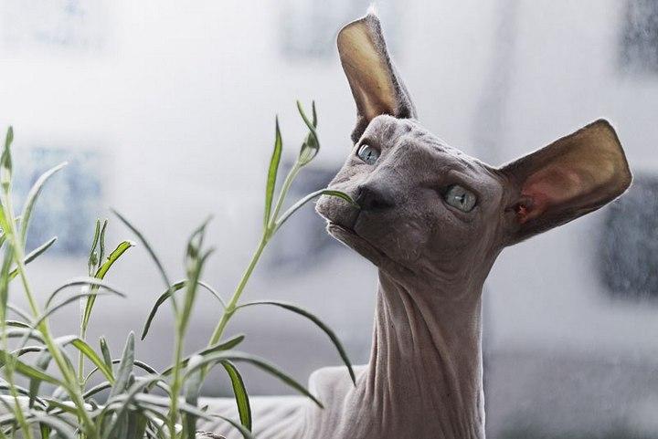 Фото животных в стиле Minecraft (6)