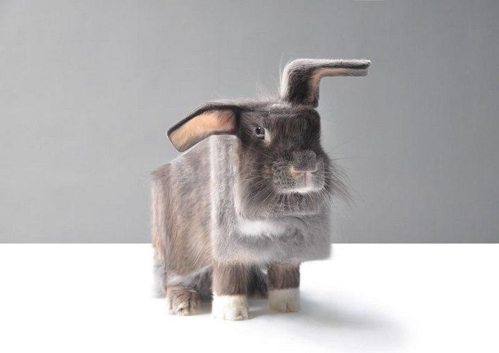 Фото животных в стиле Minecraft (7)