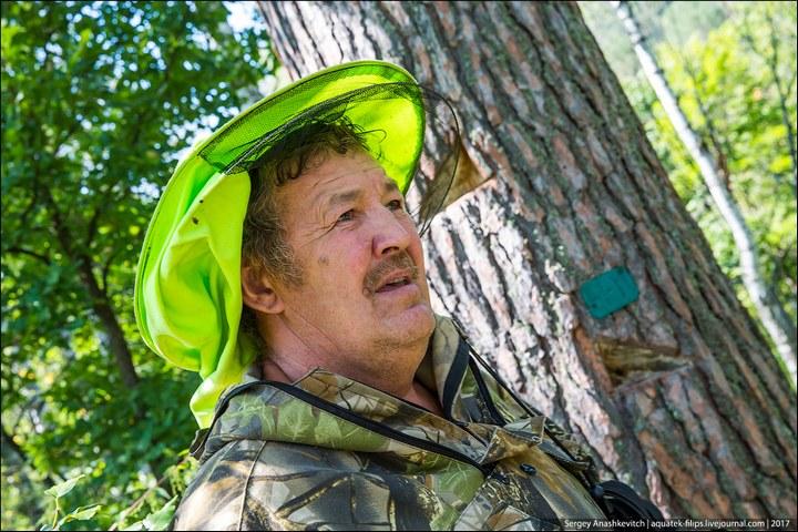 Как в Башкирии добывают мед диких пчел (3)