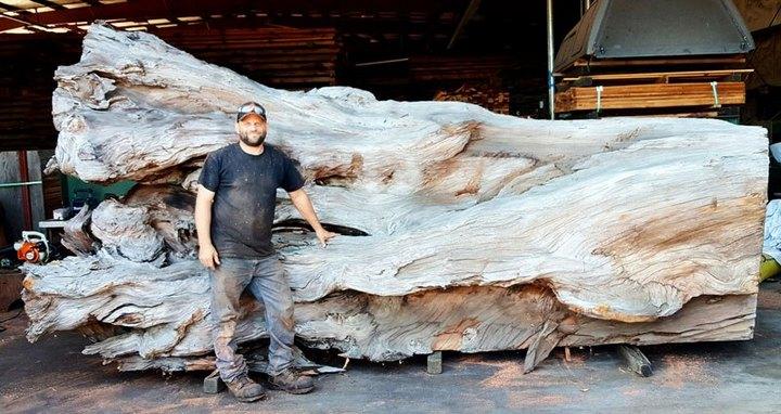 Превращение корня дерева в гигантского осьминога (1)
