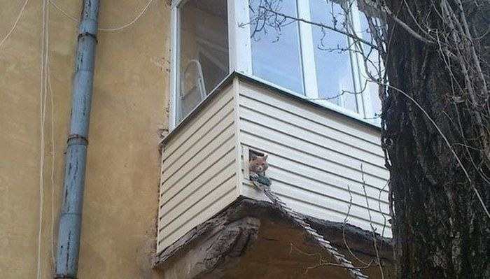 Балкон в России как объект для творчества и креативных идей (18)