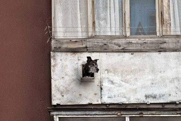 Балкон в России как объект для творчества и креативных идей (15)