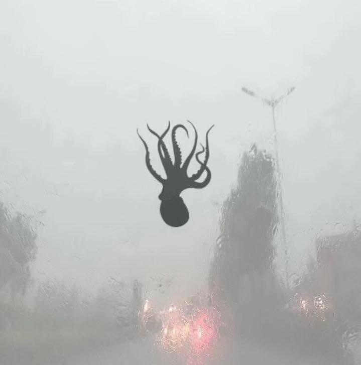 Тайфун над Циндао в Китае рассыпал морских животных (1)