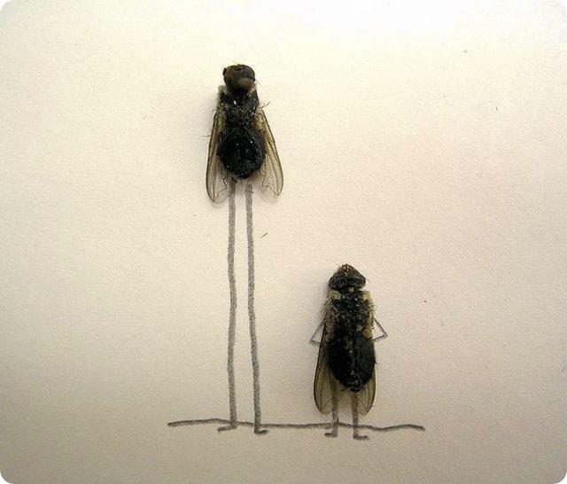 Днем, картинки с мухами прикольные