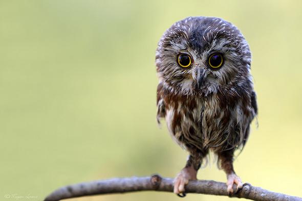 прикольные фотографии совы (10)