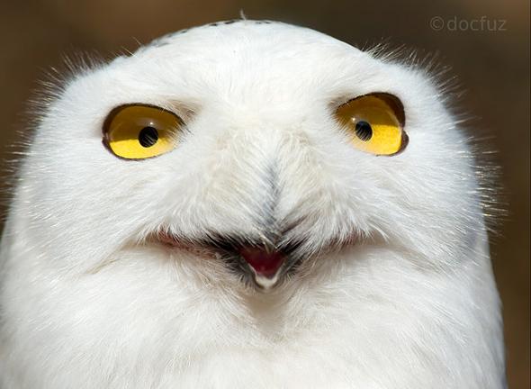 прикольные фотографии совы (4)