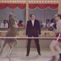 Интересное видео. На ринге Вуди Аллен и кенгуру…