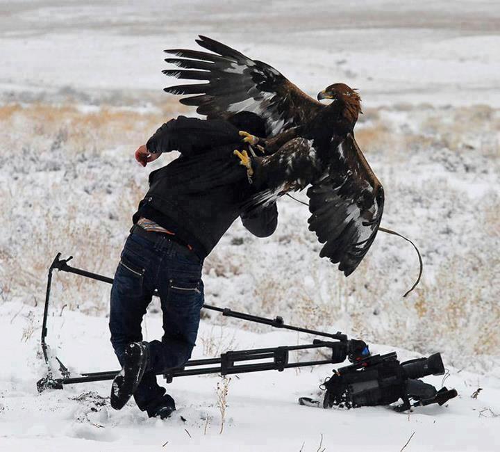орел напал на фотографа