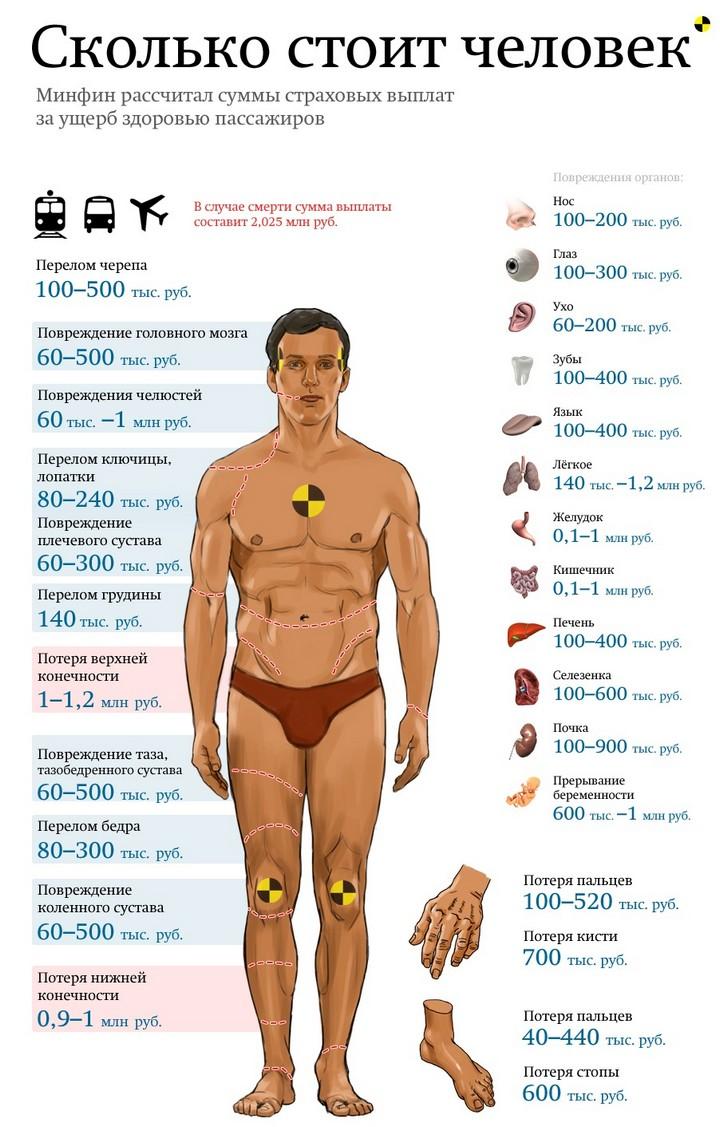 Инфографика. Сколько стоят части тела человека