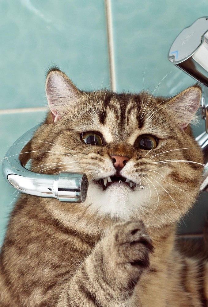 Красивые фотографии кошек (16)