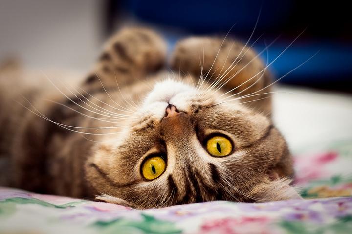 Красивые фотографии кошек (13)