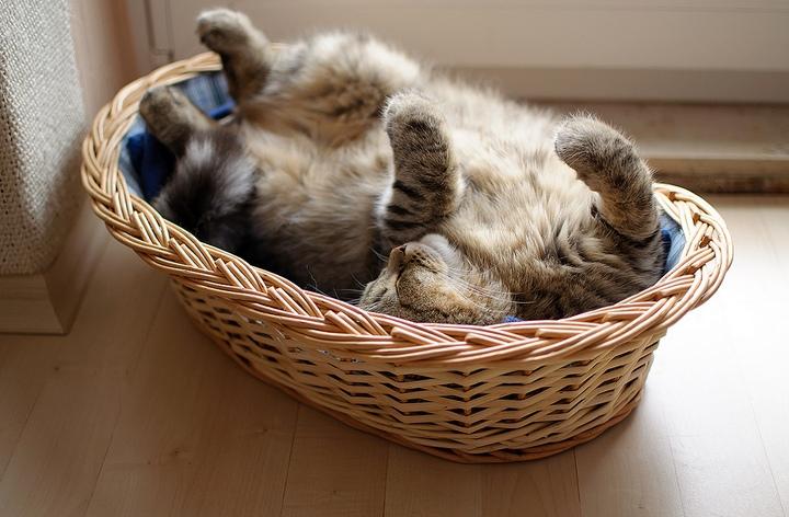 Красивые фотографии кошек (12)