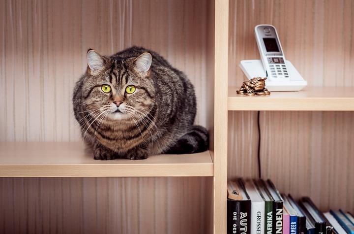Красивые фотографии кошек (10)