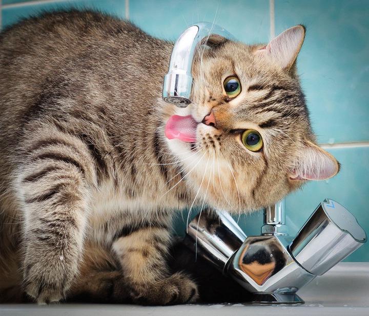 Красивые фотографии кошек (1)