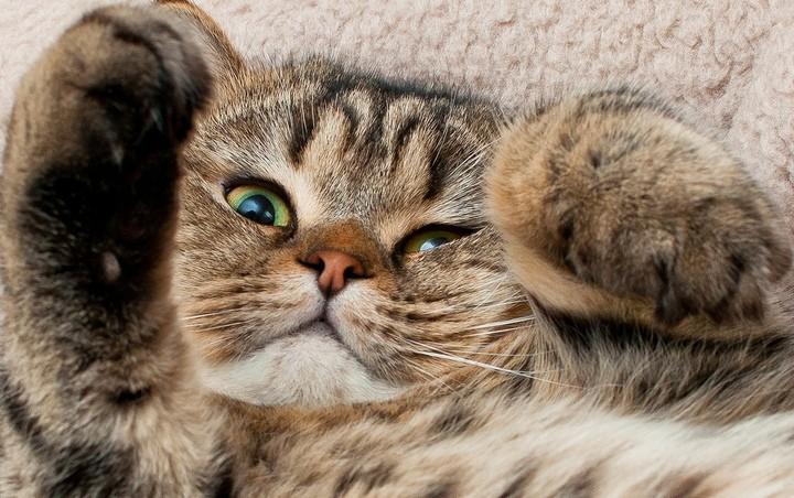 Красивые фотографии кошек (2)
