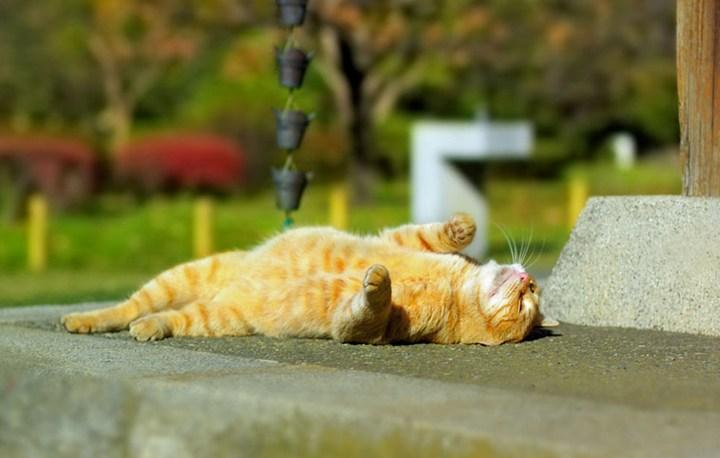 Кот принимает солнечные ванны