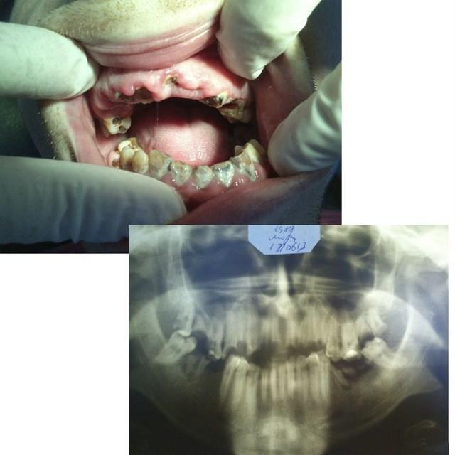 Стоматология без прикрас или откровения зубного врача (6)