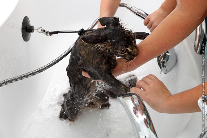 Как нужно правильно мыть кошку, как помыть кошку (15)