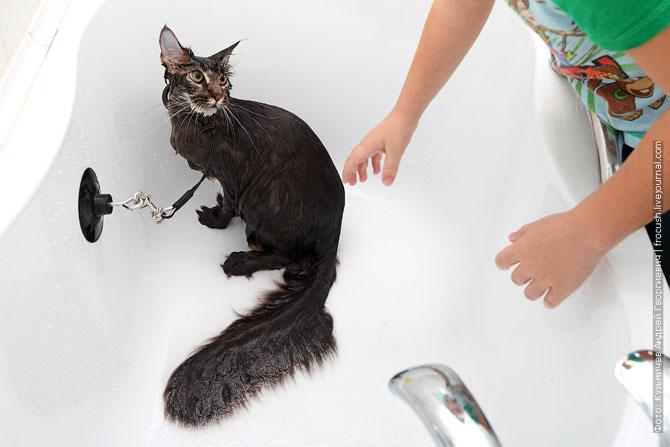 Как нужно правильно мыть кошку, как помыть кошку (19)