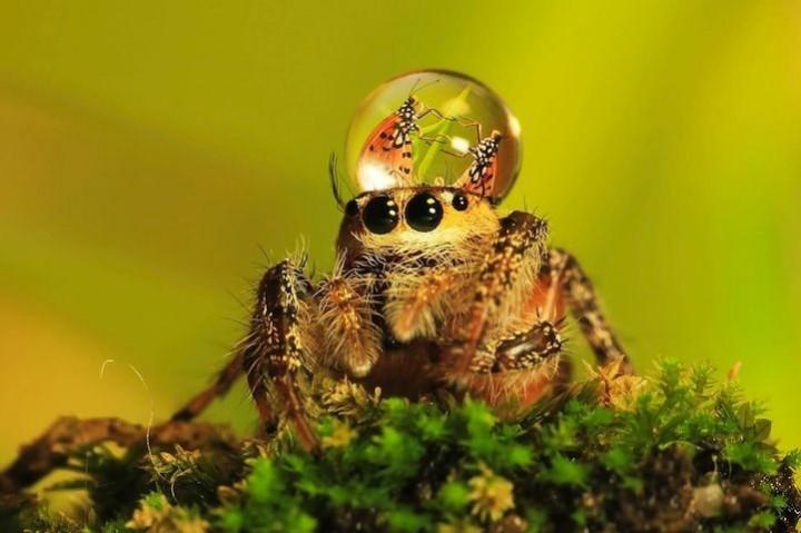 красивые макро фотографии пауков (6)
